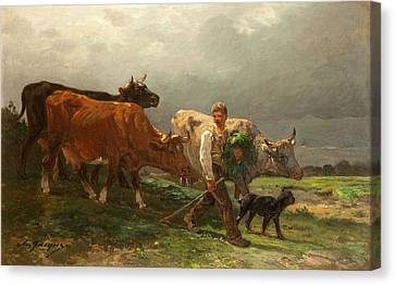 Breton Lad With Cattle Canvas Print by Julius Caesar Ibbetson