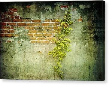 Brick Wall Canvas Print by Linda Olsen