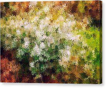Bridal's Wreath Canvas Print by Brenda Bryant