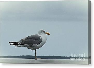 Bridge Gull Canvas Print by Cathy Lindsey