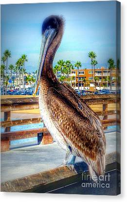 Brief Pelican Encounter  Canvas Print