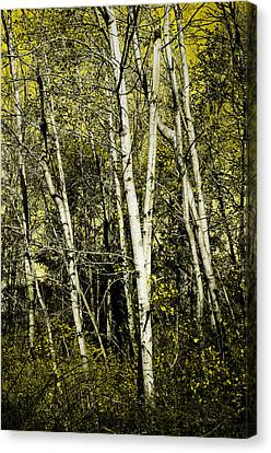 Briers And Brambles Canvas Print by Luke Moore