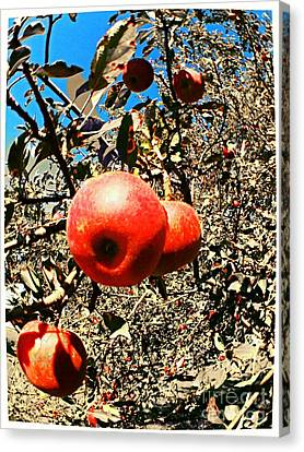 Bright Apples Canvas Print by Garren Zanker