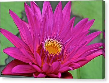 Bright Beauty Canvas Print by Frozen in Time Fine Art Photography