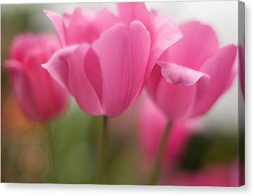 Bright Bunch Of Tulips Canvas Print by Mike Reid