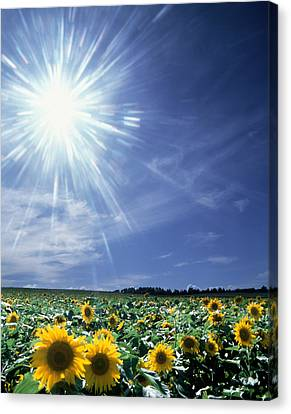 Bright Burst Of White Light Above Field Canvas Print by Panoramic Images