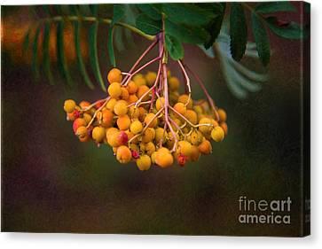 Bright Bursting Berries Garden Art By Omaste Witkowski Canvas Print by Omaste Witkowski