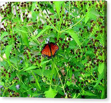Canvas Print featuring the photograph Bright Butterfly by David  Norman