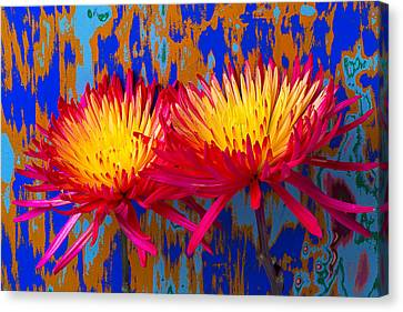 Bright Colorful Mums Canvas Print by Garry Gay