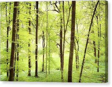 Bright Green Forest In Spring With Beautiful Soft Light  Canvas Print by Matthias Hauser