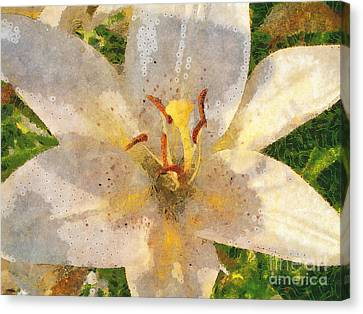 Bright Lily Canvas Print by Claire Bull