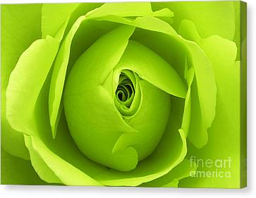 Bright Lime Green Rose Flower Canvas Print by Natalie Kinnear