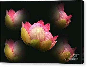 Bright Lotus Echoes Canvas Print