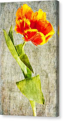 Artificial Flowers Wholesale Canvas Print - Bright Parrot 2 by Courtney Trusty