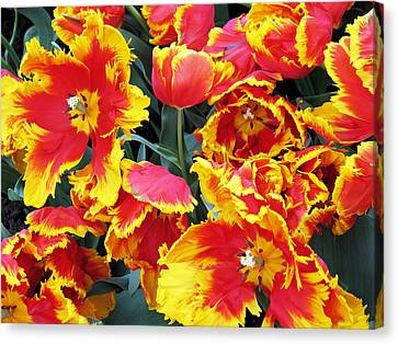 Canvas Print featuring the photograph Bright Parrot Tulips by Gerry Bates