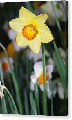 Canvas Print featuring the photograph Bright Shiny Face by Sheila Byers