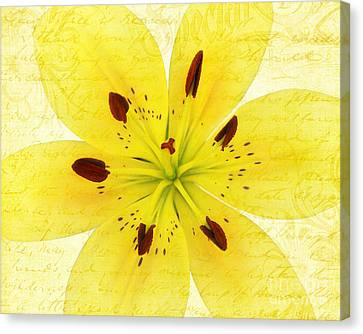 Bright Spot In My Day Canvas Print by Kathi Mirto