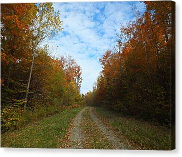 Bright Trail Canvas Print by Gene Cyr