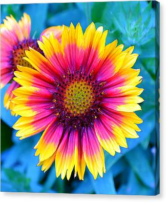 Canvas Print featuring the photograph Brilliance by Deena Stoddard
