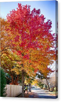 brilliant autumn colors on a Marblehead street Canvas Print