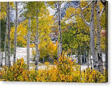 Brilliant Autumn Canvas Print by Leland D Howard