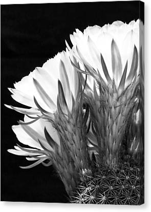 Brilliant Blossoms Diptych Left Canvas Print by Kelley King