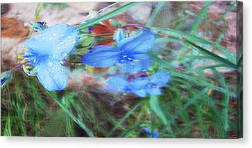 Canvas Print featuring the photograph Brilliant Blue Flowers by Cathy Anderson