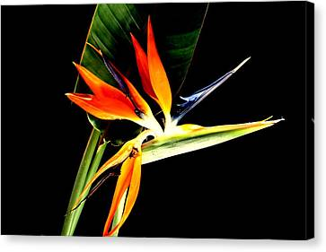 Canvas Print featuring the photograph Brilliant by Diane Merkle