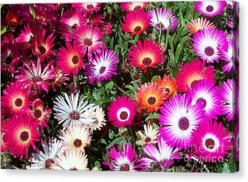 Brilliant Flowers Canvas Print by Chalet Roome-Rigdon
