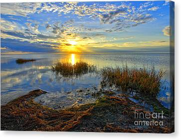 Brilliant Pamlico Sound Sunset On Outer Banks Canvas Print by Dan Carmichael