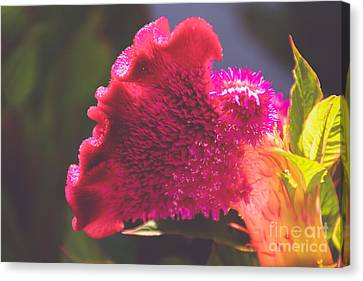 Brilliant Pink Canvas Print by Gloria Pasko