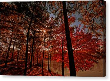 Canvas Print featuring the photograph Brilliant Shade by John Harding
