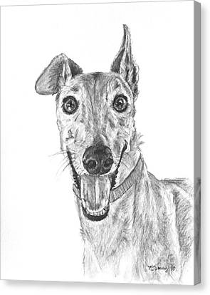 Brindle Greyhound Close Up Portrait Canvas Print by Kate Sumners