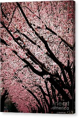 Bring On Spring Canvas Print