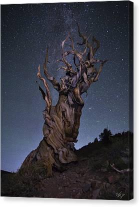 Andromeda Galaxy Canvas Print - Bristlecone Ballet by Peter Coskun