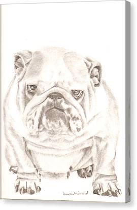 British Bulldog Winnie Canvas Print