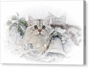British Longhair Cat Christmas Time II Canvas Print by Melanie Viola
