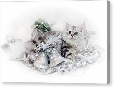 British Longhair Cat Christmas Time Canvas Print by Melanie Viola
