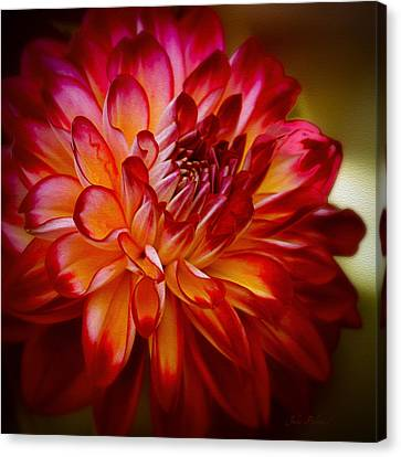 Brittany Red Dahlia Canvas Print by Julie Palencia
