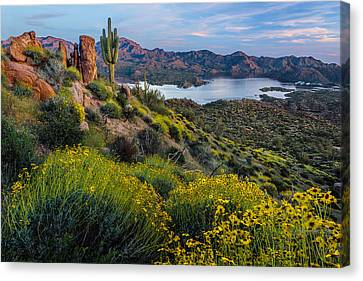 Saguaro Cactus Canvas Print - Brittlebush Over Bartlett by Guy Schmickle
