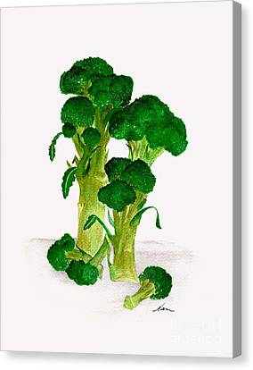 Broccoli Stalks Bright And Green Fresh From The Garden Canvas Print