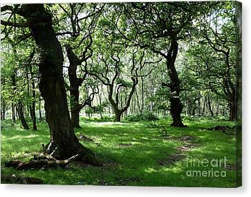 Brocton Coppice Canvas Print by John Chatterley