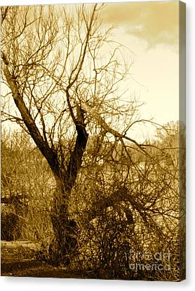 Broken But Beautiful Tree Canvas Print by Q's House of Art ArtandFinePhotography