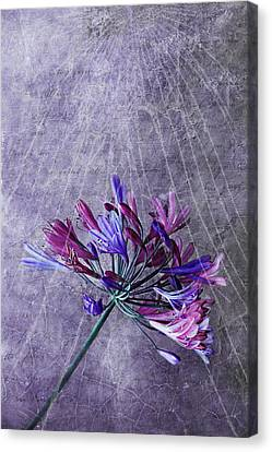 Broken Dreams Canvas Print by Claudia Moeckel