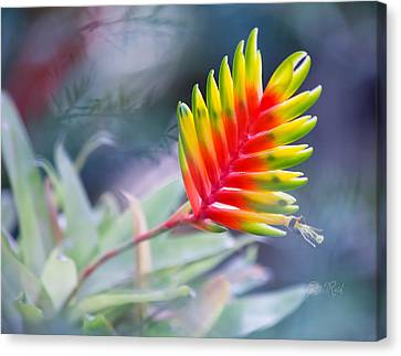Bromeliad Beauty Canvas Print by Eti Reid