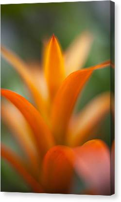 Bromeliad Canvas Print - Bromeliad Flow by Mike Reid