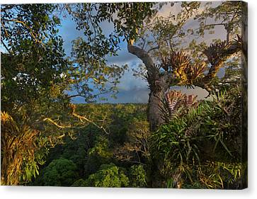 Bromeliad Canvas Print - Bromeliads, Ferns, And Orchids Cover by Steve Winter