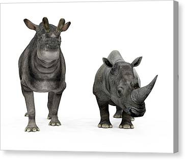 Brontotherium And Rhino Compared Canvas Print by Walter Myers