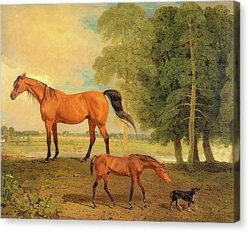 Broodmare With Foal, And A Terrier Broodmare With Foal Canvas Print by Litz Collection