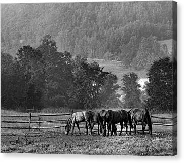 Canvas Print featuring the photograph Broodmares by Joan Davis